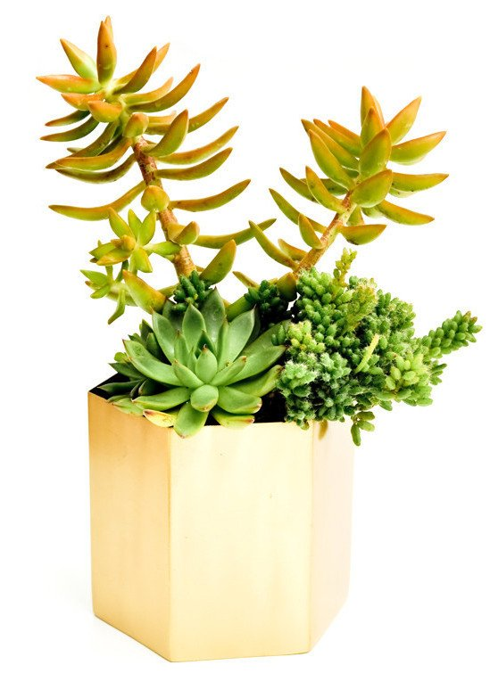 brass_hexagon_planter_large_with_plants_1024x1024_1024x1024